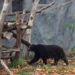 DAX-Bären bleiben in Deckung